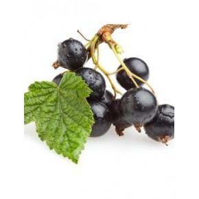 Aroma Black Currant TPA 10ml