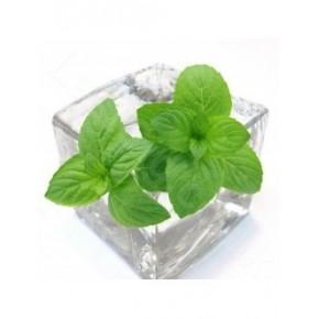Aroma Menthol Liquid PG TPA 10ml